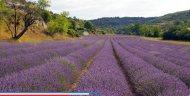 vakantiehuis-provence-lavendel
